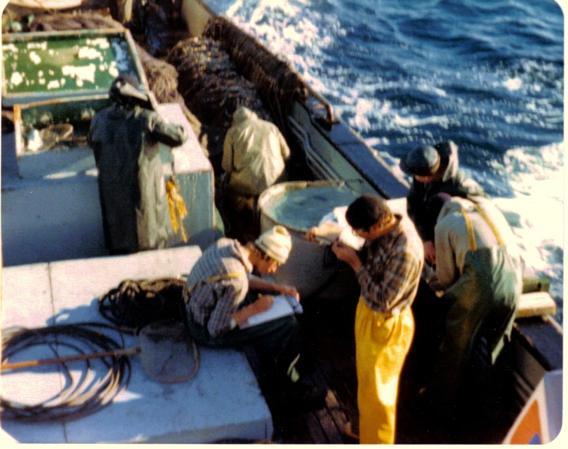 Tagging salmon off Adak on the FV Commander in 1978.