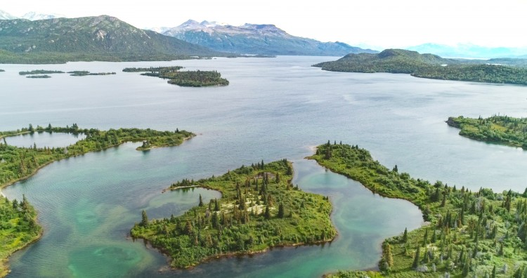 Iliamna Lake, Alaska's largest freshwater lake, is situated in the Bristol Bay region. The islands on the east end of the lake are the seals' primary habitat.