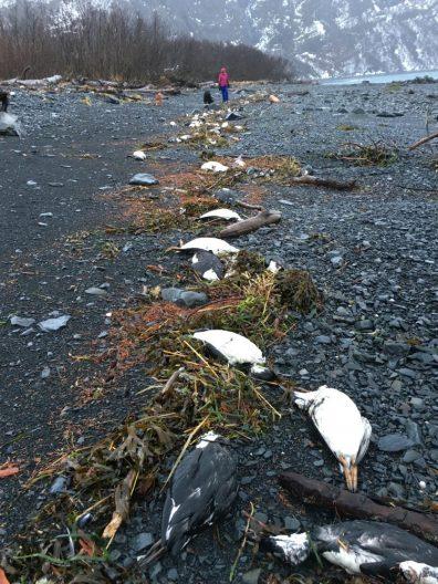 dead seabird on beach