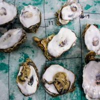 Empty Pacific oyster shells on a lab table