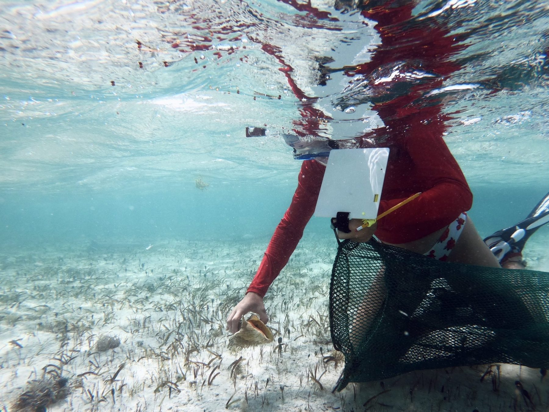 Delaney Lawson collecting conch shells underwater