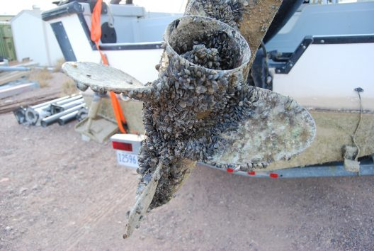 Invasive zebra mussels were considered in this study.USFWS Fish and Aquatic Conservation