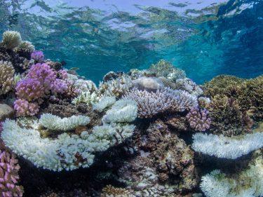 Underwater image of corals