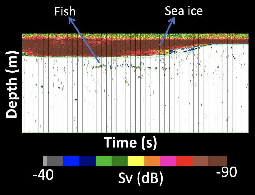 Sample of acoustic backscatter under the sea ice from the CEO.