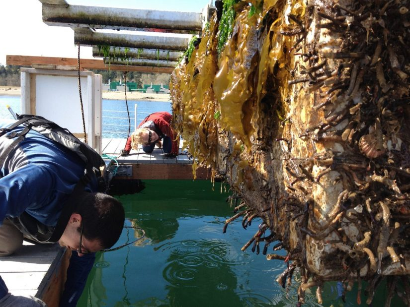 """Checking out all the sea life attached to the FLUPSY (""""floating upweller system""""), which is used to grow juvenile oysters."""