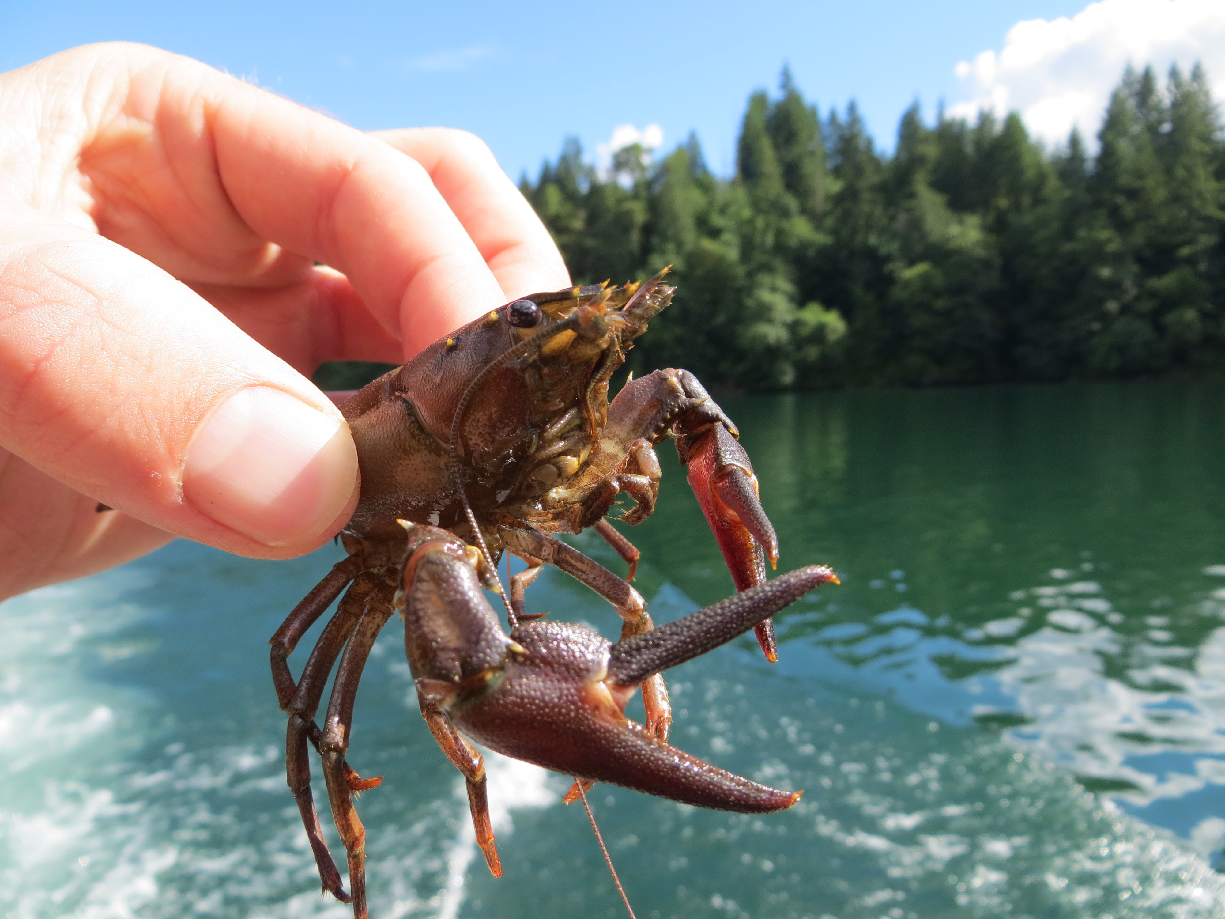 an analysis of the factors that determine the nature of all aquatic environments The macro environment and pest analysis of change within the environments in which involves a study of economic factors all businesses are affected by.