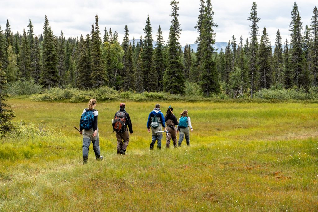 Five students hike across tundra on their way back to camp in Alaska
