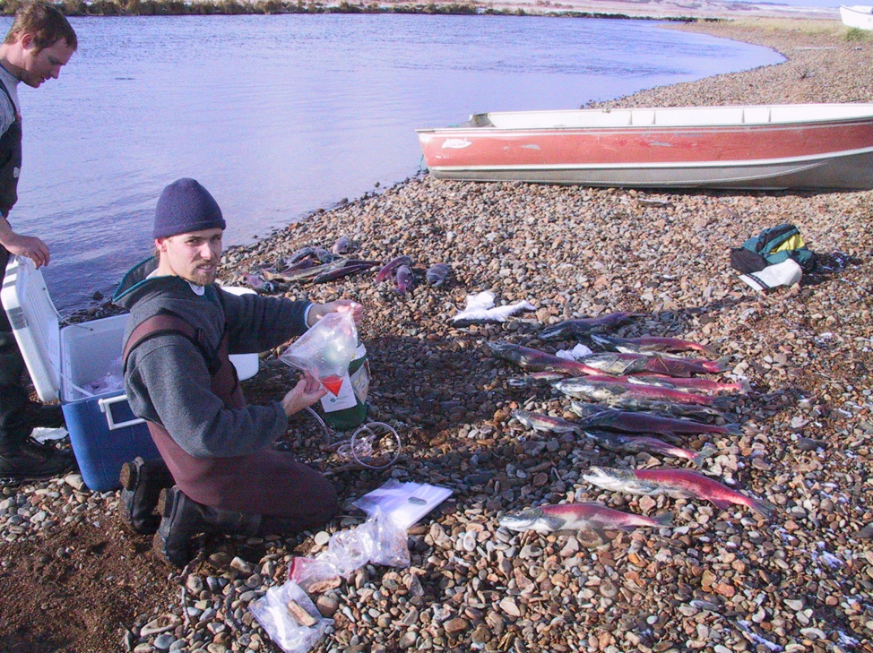 Ian sampling sockeye salmon in Alaska with Chris Boatright (MS, 2003).