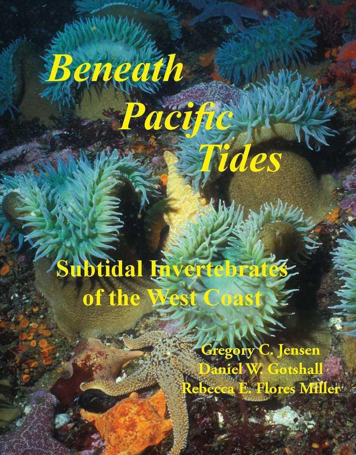 Beneath Pacific Tides: Subtidal Invertebrates of the West Coast cover