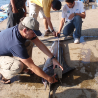 Sampling marlin catches in artisanal fisheries; El Salvador, 2013.