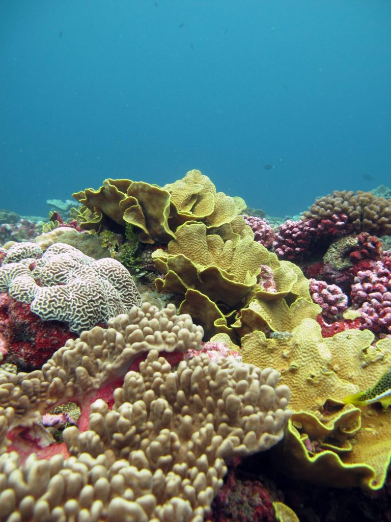 A coral reef.